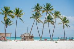 Ладони на пляже Стоковое Фото