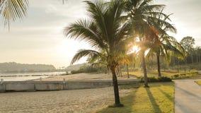 Ладони на пляже стоковое изображение