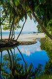 Ладони на Сейшельских островах Стоковое фото RF
