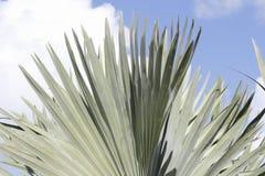 Ладонь вентилятора выходит внешняя предпосылка Стоковая Фотография RF