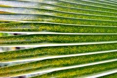Ладонь вентилятора Стоковое Изображение