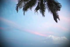 Ладонь выходит на предпосылку белых облаков Стоковые Изображения RF