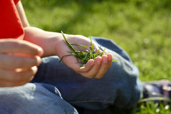 Ладонь детей с зеленой травой Стоковое Изображение RF