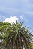 Ладонь и другие деревья стоковое фото rf