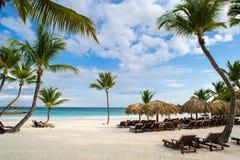 Ладонь и тропический пляж в тропическом рае. Временя holyday в Доминиканской Республике, Сейшельских островах, Вест-Инди, Филиппин Стоковая Фотография