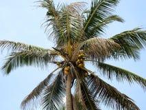 Ладонь кокоса в небе Стоковые Фотографии RF