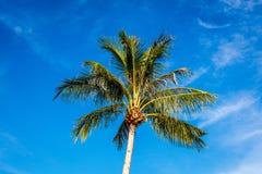 Ладонь кокоса, остров Boracay, Филиппины Стоковое Фото