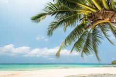 Ладонь кокосовой пальмы на красивом пляже Стоковое фото RF