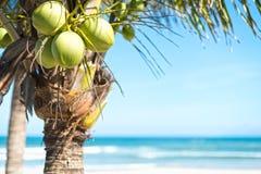 Ладонь кокоса с предпосылкой неба и океана. Стоковые Фотографии RF
