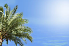 Ладонь, море и солнечный свет Стоковое фото RF