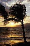 Ладонь на заходе солнца на Мауи, Гаваи Стоковые Изображения RF