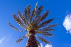 Ладонь на предпосылке голубого неба с облаками Стоковое Фото