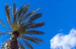 Ладонь на предпосылке голубого неба с облаками Стоковая Фотография RF