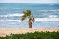 Ладонь на пляже моря Стоковые Изображения RF