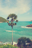 Ладонь на тропической предпосылке моря Стоковая Фотография RF
