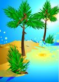 ладонь пляжа тропическая Стоковое Фото