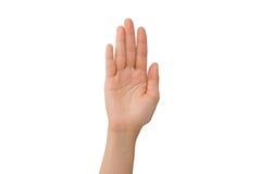 Ладонь правой руки молодой дамы Стоковое Фото