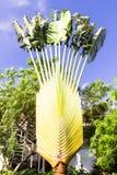 Ладонь путешественника с листьями вырезывания Стоковые Фотографии RF