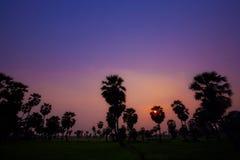 Ладонь сахара во время захода солнца Стоковые Изображения