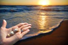 Ладонь с раковинами моря на пляже Стоковое Изображение