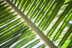 Ладонь Tropycal зеленого цвета фото макроса на запачканной предпосылке Одичалый завод природы Горизонтальное изображение Изображе Стоковые Изображения RF