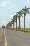 Ладон-выровнянная дорога Стоковое Изображение
