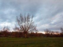 Ла травы неба сельской местности красивого чуть-чуть dedham дерева осени пустое Стоковая Фотография RF