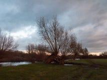 Ла травы неба сельской местности красивого чуть-чуть dedham дерева осени пустое Стоковое Изображение RF