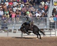 Ла Фиеста De Лос Vaqueros, Tucson, Аризона Стоковые Изображения RF