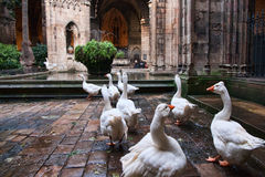 Ла Catedral, Барселона Испания Стоковое Изображение