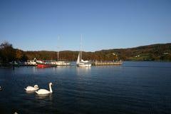 лебеди озера стоковое изображение