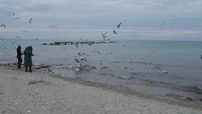 Лебеди питания людей сток-видео