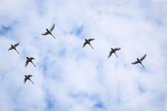 лебеди стаи стоковое фото