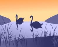 лебеди 2 иллюстрация вектора