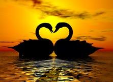 лебедь захода солнца влюбленности Стоковое фото RF