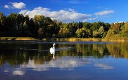 лебедь ландшафта Стоковые Изображения