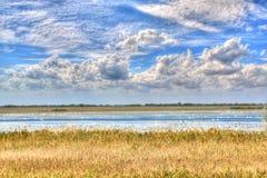 лебедь озера Стоковая Фотография RF