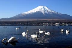 лебедь партии Стоковое Фото