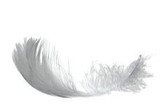 лебедь пера светлый Стоковое Изображение