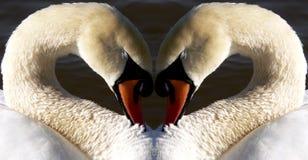 лебедь сердца Стоковые Фотографии RF