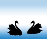 Лебедь. Стоковая Фотография