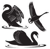 Лебедь иллюстрация вектора