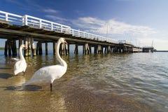 лебедь sopot пристани стоковые изображения
