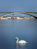 лебедь stockholm Стоковые Изображения