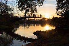 2 лебедя на озере пока люди наблюдают заход солнца, парке Ibirapuera, Сан-Паулу, Бразилии Стоковое Изображение RF