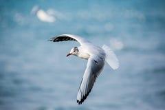 Лебеди и другие водоплавающие птицы на море Стоковые Изображения RF