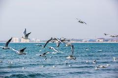 Лебеди и другие водоплавающие птицы на море Стоковая Фотография RF