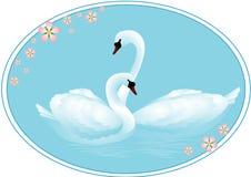 лебеди пар влюбленности Стоковая Фотография RF