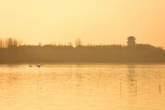 Лебедь и башня летания Стоковое фото RF
