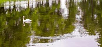 Лебедь и круги на воде Стоковые Изображения